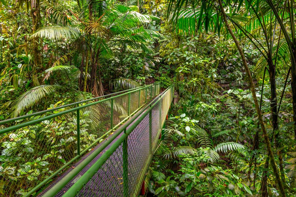 Kostarika, deštný prales, visutý most
