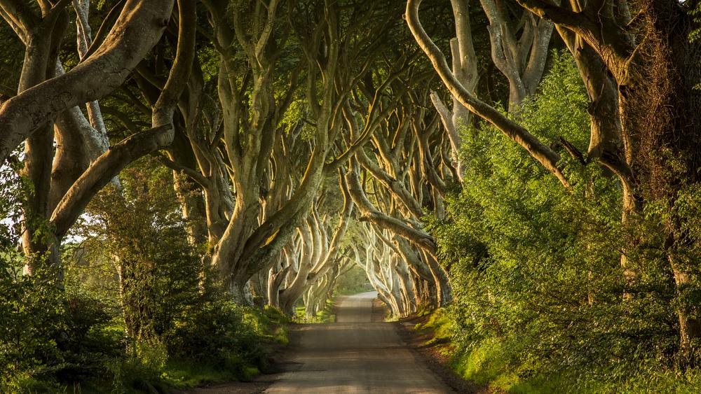 Severní Irsko, Dark Hedges, Hra o trůny